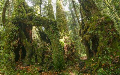 "Lamington National Park ""Good to Go"" Virtually"